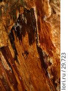 Купить «Paper-bark eucalypt. Кора старого эвкалипта.», фото № 29723, снято 15 апреля 2007 г. (c) Eleanor Wilks / Фотобанк Лори