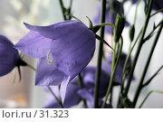 Купить «Колокольчик», фото № 31323, снято 24 июня 2005 г. (c) Кучкаев Марат / Фотобанк Лори