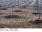 Купить «Фон: вид на ряды молодых саженцев в дымке», фото № 33279, снято 17 марта 2007 г. (c) Крупнов Денис / Фотобанк Лори
