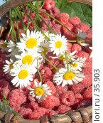 Купить «Малиновое настроение», фото № 35903, снято 25 июля 2006 г. (c) Ирина Солошенко / Фотобанк Лори
