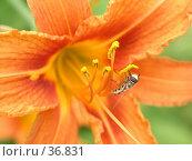 Купить «Собираем пыльцу», фото № 36831, снято 23 мая 2018 г. (c) Андрей Яшин / Фотобанк Лори