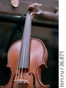 Купить «Скрипичный гриф», фото № 36871, снято 26 апреля 2018 г. (c) Андрей Соколов / Фотобанк Лори