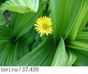 Купить «Цветок-одиночка», фото № 37439, снято 4 июля 2006 г. (c) Маря / Фотобанк Лори