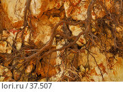 Купить «Переплетение корней деревьев на вертикальной скале», фото № 37507, снято 13 мая 2007 г. (c) Eleanor Wilks / Фотобанк Лори