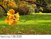 Купить «Осень в парке», фото № 38939, снято 21 января 2018 г. (c) Татьяна Белова / Фотобанк Лори
