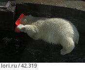 Купить «Белый медвежонок в зоопарке», фото № 42319, снято 21 января 2019 г. (c) Артемьева Анна / Фотобанк Лори
