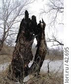 Купить «Сгоревший ствол дерева», фото № 42695, снято 12 мая 2007 г. (c) Maxim Kamchatka / Фотобанк Лори