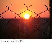 Купить «Солнце в клетке», фото № 43391, снято 11 июля 2006 г. (c) Рамиль / Фотобанк Лори