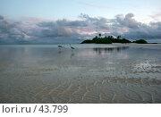 Купить «Пейзаж с двумя цаплями на берегу океана», эксклюзивное фото № 43799, снято 23 ноября 2006 г. (c) Татьяна Белова / Фотобанк Лори