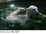 Купить «Игры в воде», фото № 46407, снято 12 апреля 2006 г. (c) Морозова Татьяна / Фотобанк Лори