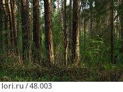 Лес на закате. Стоковое фото, фотограф vlntn / Фотобанк Лори