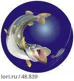 Купить «Хищная рыба (щука) преследует приманку (блесну)», иллюстрация № 48839 (c) Владимир Мельников / Фотобанк Лори