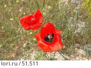 Купить «Маки Фиолента», фото № 51511, снято 20 мая 2007 г. (c) Михаил Баевский / Фотобанк Лори