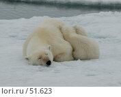 Купить «Не будить», фото № 51623, снято 11 июля 2006 г. (c) Vladimir / Фотобанк Лори