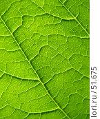Купить «Зеленый лист, текстура», фото № 51675, снято 26 марта 2019 г. (c) Надежда Болотина / Фотобанк Лори