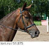 Купить «Выездка: перед стартом», фото № 51875, снято 1 июня 2007 г. (c) Михаил Браво / Фотобанк Лори