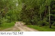 Дорога в лесу. Стоковое фото, фотограф Борис Никитин / Фотобанк Лори