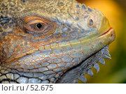 Купить «Игуана», фото № 52675, снято 20 мая 2007 г. (c) Андрей Лабутин / Фотобанк Лори
