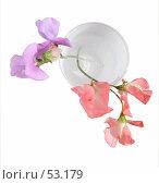 Купить «Душистый горошек в белом стакане, вид сверху», фото № 53179, снято 17 июня 2007 г. (c) Tamara Kulikova / Фотобанк Лори