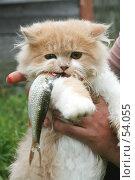 Купить «Кот ест рыбу», фото № 54055, снято 27 августа 2006 г. (c) Останина Екатерина / Фотобанк Лори