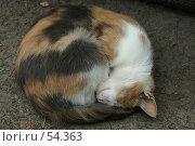 Кошка клубок. Стоковое фото, фотограф Борис Никитин / Фотобанк Лори