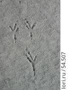 Купить «Три следа птицы на снегу», фото № 54507, снято 20 марта 2019 г. (c) Елена Мельникова / Фотобанк Лори