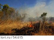 Купить «Лесной пожар и термитники», фото № 54615, снято 3 июля 2007 г. (c) Eleanor Wilks / Фотобанк Лори
