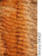 Купить «Окаменевшее дно древнего моря», фото № 54627, снято 4 июля 2007 г. (c) Eleanor Wilks / Фотобанк Лори