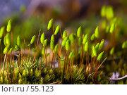 Купить «Цветущий мох», фото № 55123, снято 2 мая 2007 г. (c) Argument / Фотобанк Лори
