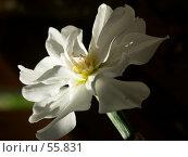 Купить «Белый цветок», эксклюзивное фото № 55831, снято 27 мая 2007 г. (c) Михаил Карташов / Фотобанк Лори