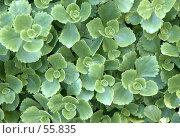 Купить «Садовые растения», эксклюзивное фото № 55835, снято 11 июня 2007 г. (c) Михаил Карташов / Фотобанк Лори