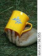 Купить «Утро в лесу», фото № 56955, снято 1 июля 2007 г. (c) Захаров Владимир / Фотобанк Лори