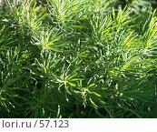 Купить «Садовый мох», эксклюзивное фото № 57123, снято 11 июня 2007 г. (c) Михаил Карташов / Фотобанк Лори
