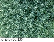 Купить «Садовый мох», эксклюзивное фото № 57135, снято 11 июня 2007 г. (c) Михаил Карташов / Фотобанк Лори