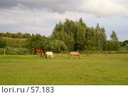 Купить «Пейзаж и лошади», эксклюзивное фото № 57183, снято 28 июня 2007 г. (c) Natalia Nemtseva / Фотобанк Лори