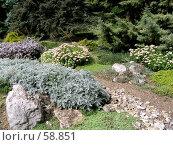 Купить «Альпийская горка в Никитском Ботаническом саду», фото № 58851, снято 6 сентября 2006 г. (c) Елена Руденко / Фотобанк Лори