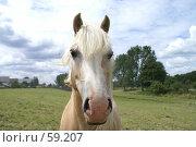 Купить «Портрет лошади», эксклюзивное фото № 59207, снято 27 июня 2007 г. (c) Natalia Nemtseva / Фотобанк Лори