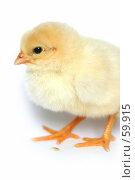 Купить «Маленький желтый цыпленок», фото № 59915, снято 23 мая 2007 г. (c) Останина Екатерина / Фотобанк Лори