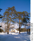 Купить «Сосны, зима», фото № 60059, снято 24 февраля 2007 г. (c) Вячеслав Потапов / Фотобанк Лори