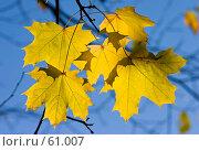 Купить «Желтое на голубом», фото № 61007, снято 9 октября 2005 г. (c) Argument / Фотобанк Лори