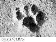 Купить «След левой кошачьей лапки на бетоне», фото № 61075, снято 28 июня 2007 г. (c) Ларина Татьяна / Фотобанк Лори