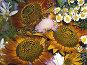 Букет полевых цветов, фото № 62223, снято 14 июля 2007 г. (c) Елена Руденко / Фотобанк Лори