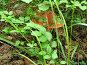 Спрятался, фото № 62263, снято 10 июля 2007 г. (c) Осиев Антон / Фотобанк Лори