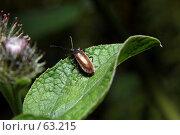 Купить «Жучок», фото № 63215, снято 14 июля 2007 г. (c) Сергей Лаврентьев / Фотобанк Лори