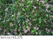 Купить «Верхний слой дёрна в весенней тайге (фон)», фото № 63275, снято 6 июня 2007 г. (c) Круглов Олег / Фотобанк Лори