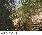 Купить «Фактурная поверхность стекла с преломлениями», фото № 64111, снято 12 мая 2004 г. (c) Harry / Фотобанк Лори