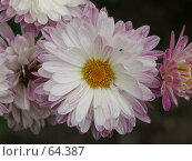 Купить «Цветок», эксклюзивное фото № 64387, снято 14 августа 2005 г. (c) Михаил Карташов / Фотобанк Лори