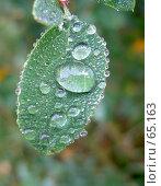 Купить «После дождя», фото № 65163, снято 2 октября 2005 г. (c) Михаил Браво / Фотобанк Лори