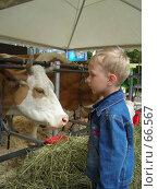 Купить «Мальчик и корова», фото № 66567, снято 20 июня 2006 г. (c) Илья Садовский / Фотобанк Лори