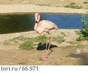 Купить «Розовый фламинго», фото № 66971, снято 23 июня 2007 г. (c) Катя Белякова / Фотобанк Лори